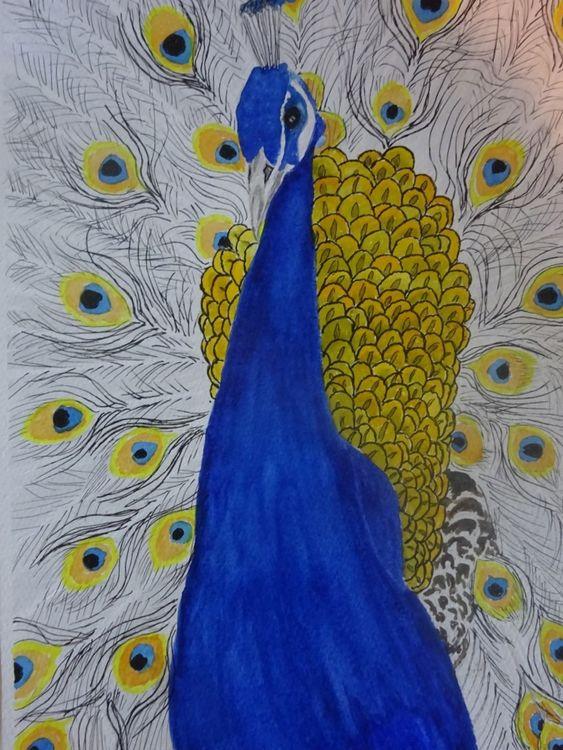 Peacock  £30