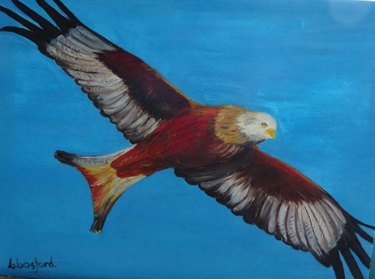 Red Kite  £40