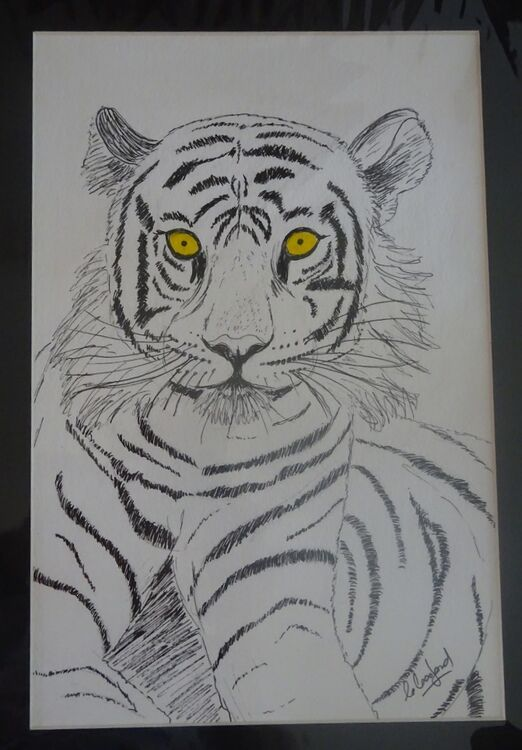 Tiger in ink  £30