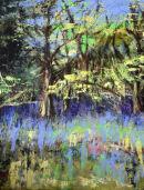 Hambleton bluebells