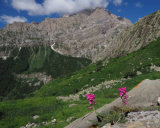 Orchids and Alps