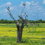 """The Bee Eater Tree"""