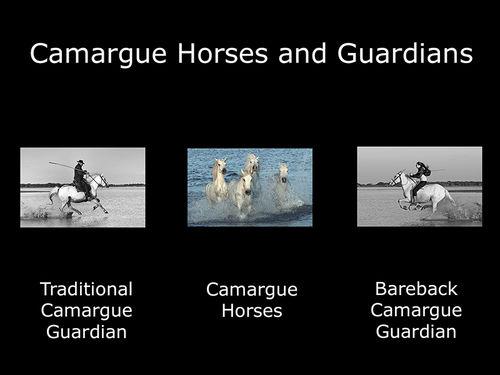 Camargue Horses and Guardians - Folio