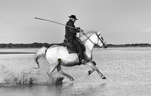 Traditional Camargue Guardian
