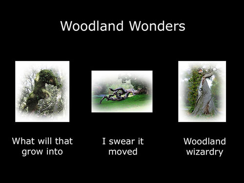 Woodland Wonders - Folio