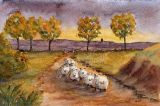 Sheep going home