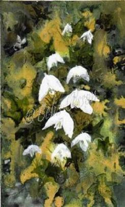Snowdrops and ivy