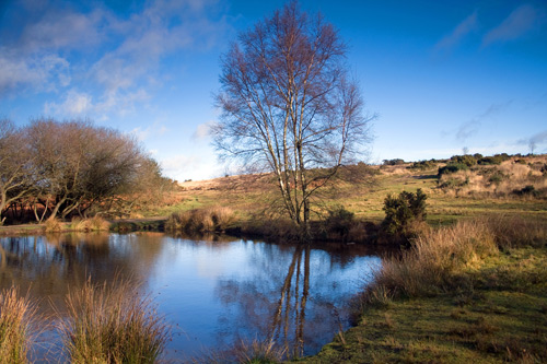 Greetings Card: Ellison's Pond Late Afternoon, Ashdown Forest
