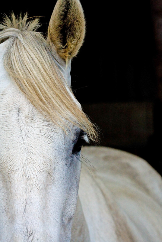 White Horse, Ashdown Forest, Sussex