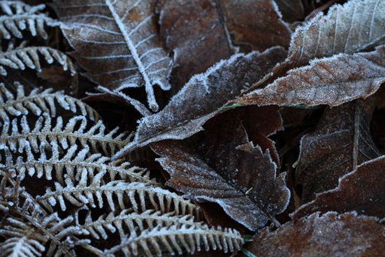 Winter's First Frost