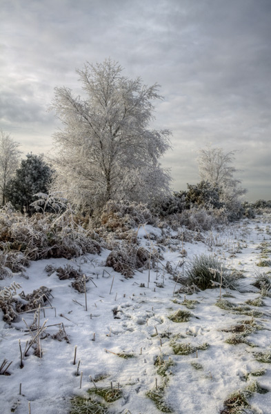 Haw Frost, Ashdown Forest