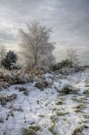 Haw Frost, Ashdown Forest
