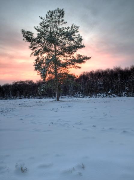 A Winter's Sunset, 2010