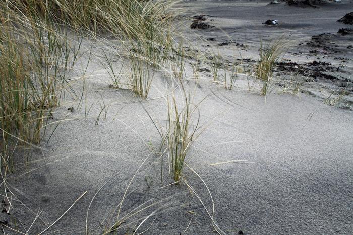 Marram Grass on the beach