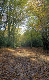 Autumn Path in 100 Aker Wood