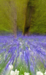 Bluebell Motion Blur
