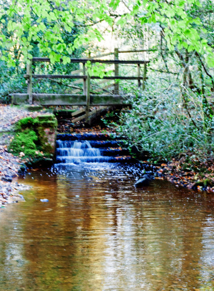 Millbrook stream, Chelwood Vachary