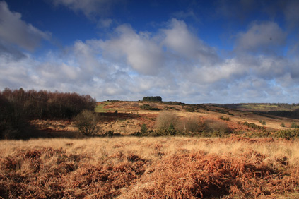 Winter Afternoon, Garden of Eden, Ashdown Forest