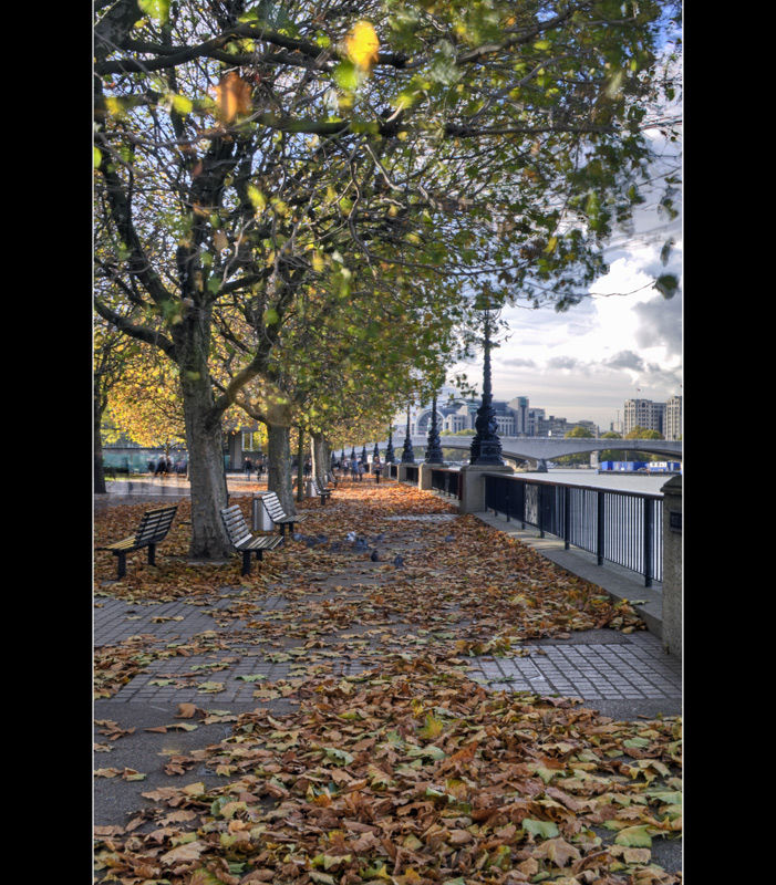 Autumn Leaves on South Bank, London