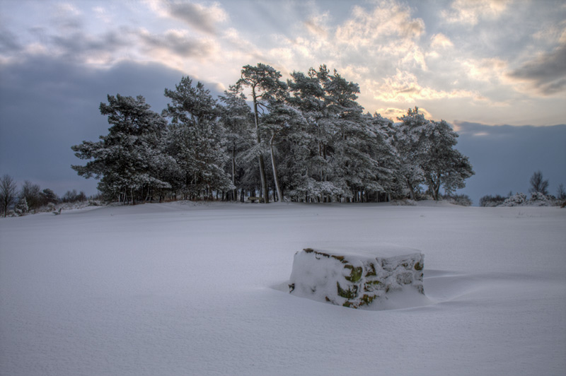 Snow over Kings Standing, Ashdown Forest, Sussex