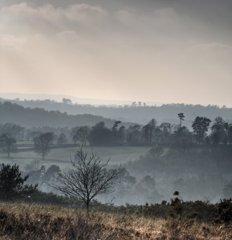 Misty Saturday in Winter, Ashdown Forest
