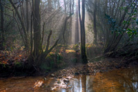 card: Misty Morning, The Mill Stream, Crowbrough Warren
