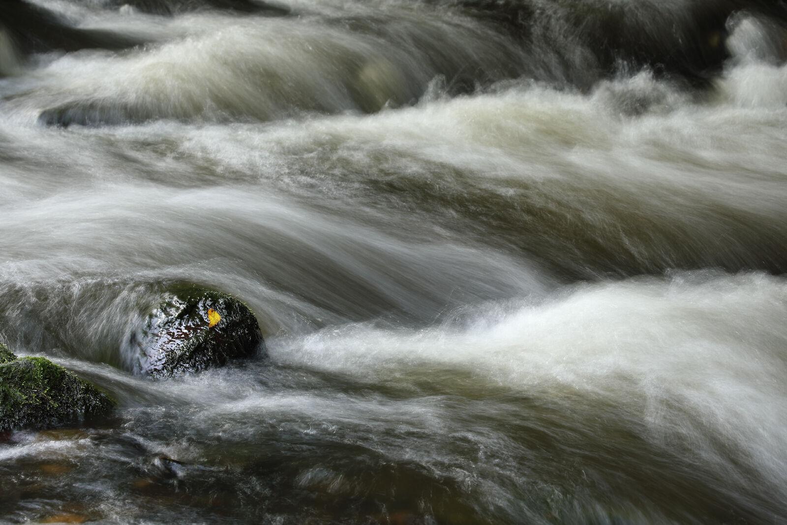 September 2021 - Water of leith, Edinburgh