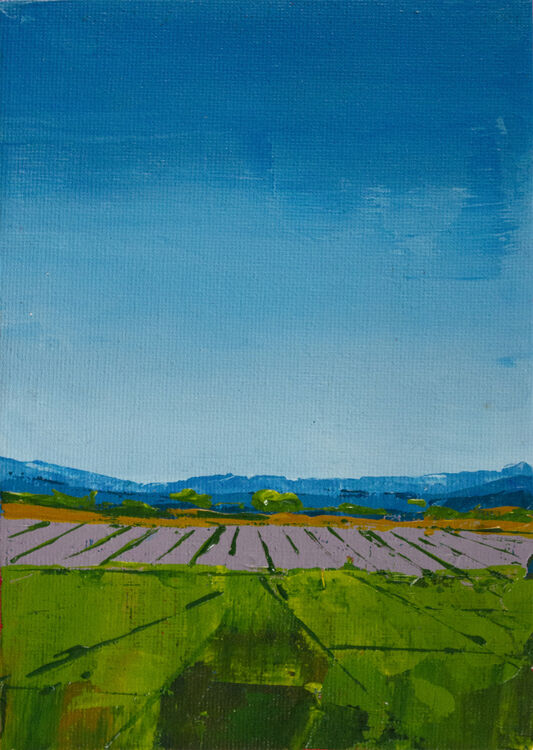 Remembered Walk XIX: Lavender Fields, Norfolk