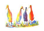 Four Indian Runner duck watercolour print