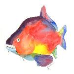 River Carp watercolour print