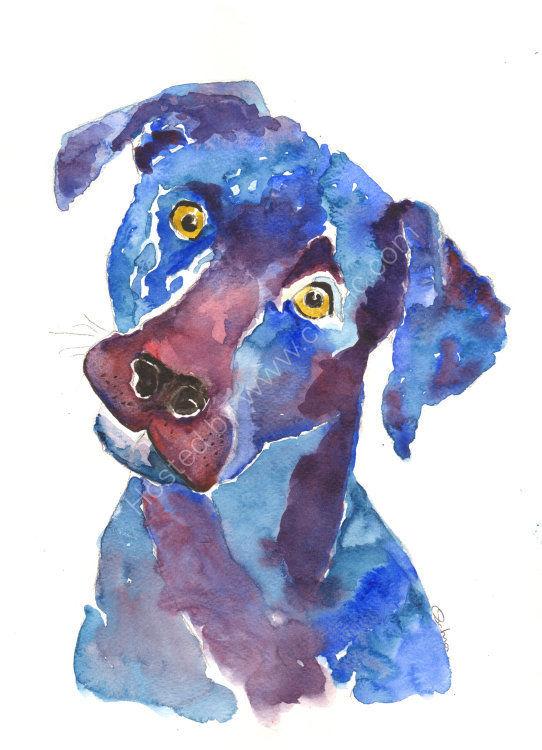 watercolour Labrador
