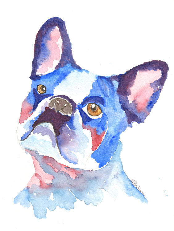 watercolour French Bull Dog