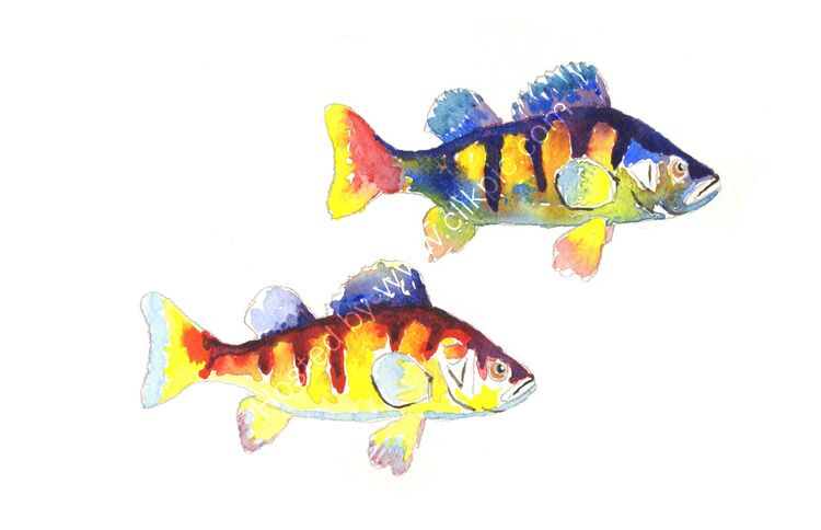 watercolour pair of Pike