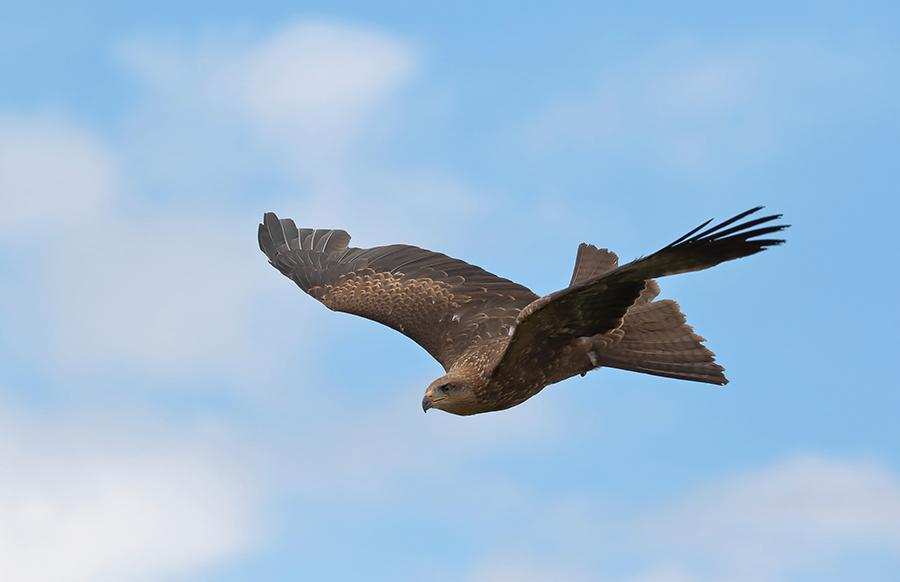 european Kite