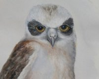 Boobook Owl Chick - Feathery Faces Series