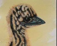 Emu Chick - Feather Faces Series