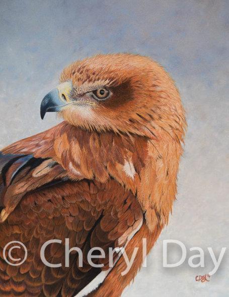 Tawny Eagle [Sold]