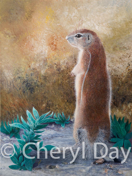 Ground Squirrel from the Western Kalahari Desert, Botswana