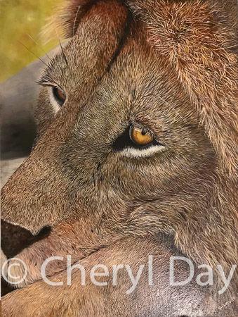 Lion Portrait in oils