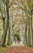 Thorpe Perrow Arboreturm