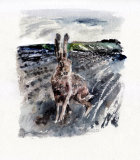 Sussex Hare