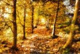 A Leaf Strewn Path in Autumn.