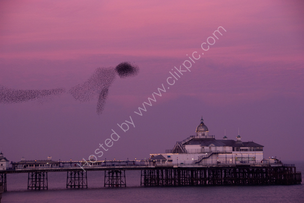 Eastbourne Pier and murmuration of Starlings