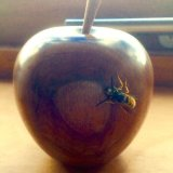 A wasp with good taste!