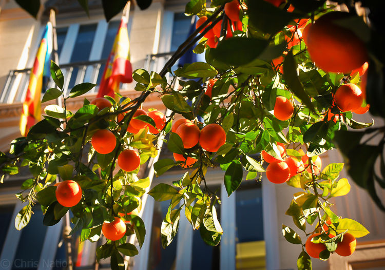 Oranges and flags-NR25-