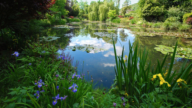The Lily Pool 1. Monet's Gdn. Giverny. FR. NR25