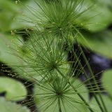 Green Spikey Flower