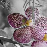 Hidden Orchid