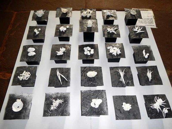 <b> third one, celebration of small organisms</b>