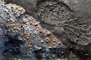 footsteps in the mud
